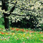 Update april: Pasen/lente 2021